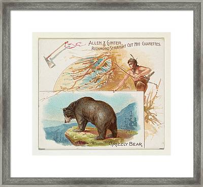 Grizzly Bear, From Quadrupeds Series Framed Print