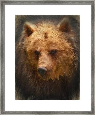 Grizzly Bear Framed Print by Ian Merton