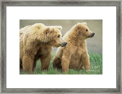 Grizzly Bear Mother And Cub  Katmai N P Framed Print by Yva Momatiuk John Eastcott