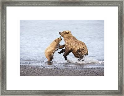 Grizzly Bear Mother Playing Framed Print