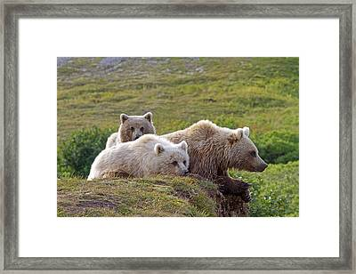 Grizzly Bear With Young Framed Print by M. Watson