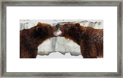 Framed Print featuring the photograph Grizzly Bears Facing Off by Jerome Lynch