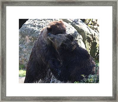 Framed Print featuring the photograph Grizzly Bears Fighting by John Telfer