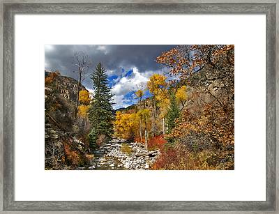 Grizzly Creek Cottonwoods Framed Print by Jeremy Rhoades