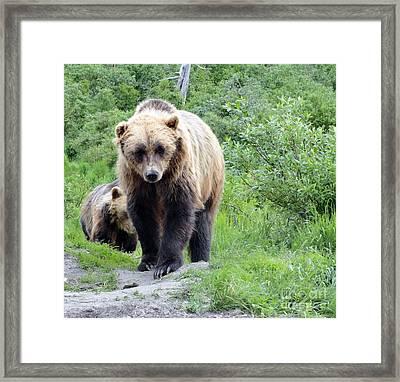 Grizzly Eye To Eye Framed Print