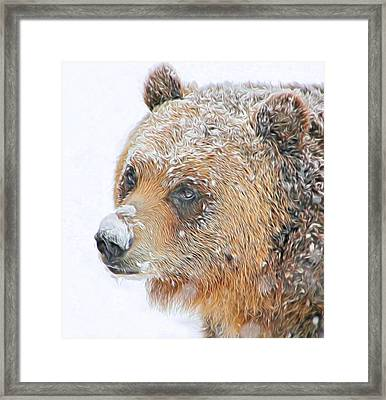 Grizzly Frost Framed Print