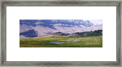 Grizzly Meadows Framed Print by Marianne NANA Betts