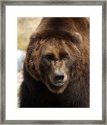Framed Print featuring the photograph Grizzly by Steve McKinzie