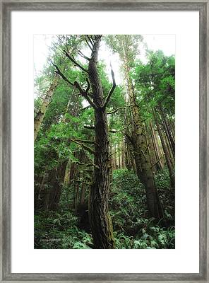 Groovin With The Redwoods Framed Print