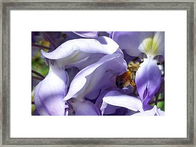 Groovy Bee Framed Print by Claudia Goodell