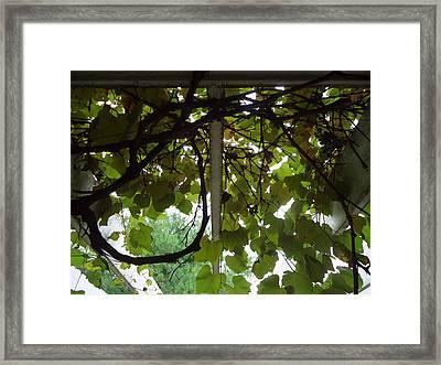 Framed Print featuring the photograph Gropius Vine by Joseph Skompski