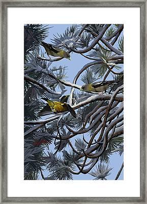 Grosbeaks On Tree Limbs Framed Print
