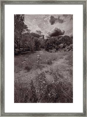 Gross Point Beach Grasses Bw Framed Print by Steve Gadomski