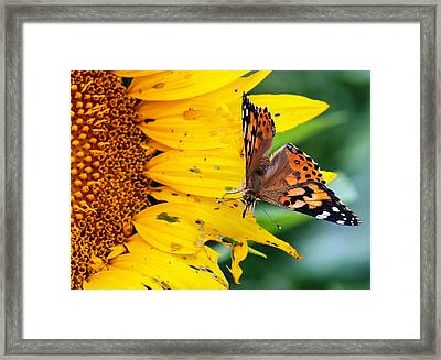 Ground Control Framed Print by Cathy Donohoue
