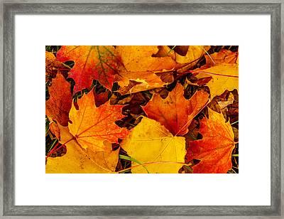 Ground Cover Framed Print by Dennis Bucklin