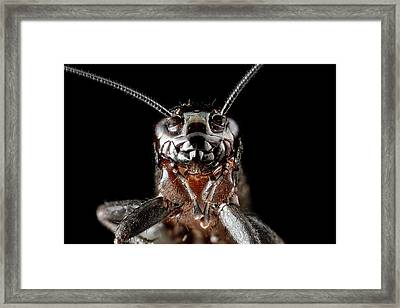 Ground Cricket Framed Print