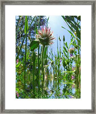 Ground Level Flora Framed Print by Joyce Dickens
