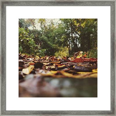 Framed Print featuring the photograph Ground Level Leaves by Nikki McInnes