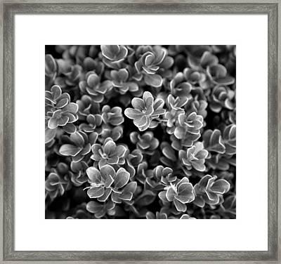 Ground Plant Framed Print by Kjirsten Collier