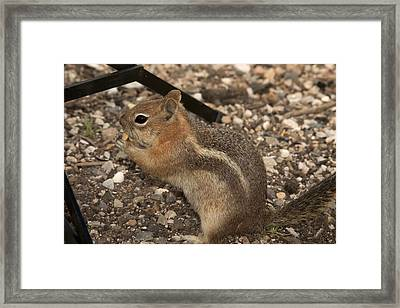Ground Squirrel Invading My Studio Framed Print