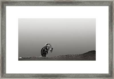Ground Squirrel Framed Print