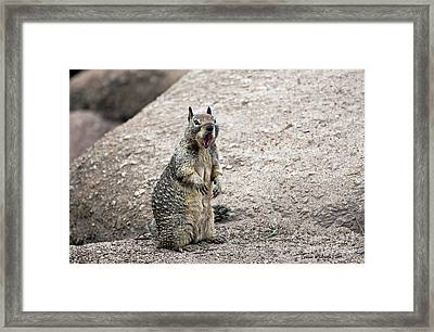 Ground Squirrel Raising A Ruckus Framed Print