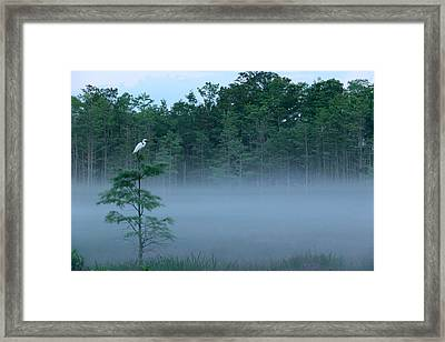 Grounded Egret Framed Print