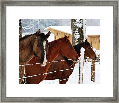 Group Meeting Framed Print by Linda Segerson
