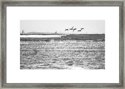 Group Of 5 Framed Print by Tracy Winter