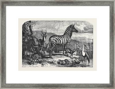 Group Of Animals Lately Received At The Gardens Framed Print