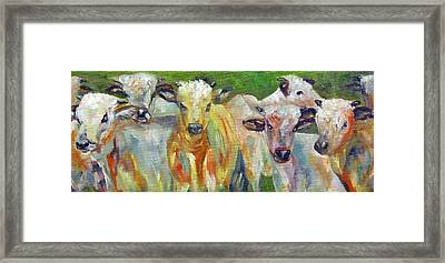 The Gathering, Cattle   Framed Print