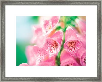 Group Of Flower Head Framed Print by Panoramic Images