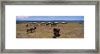 Group Of Horses And Yurts In A Field Framed Print