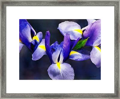 Group Of Japanese Irises Framed Print by Susan Savad