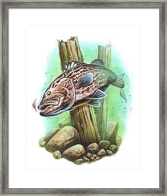 Grouper Fish Framed Print