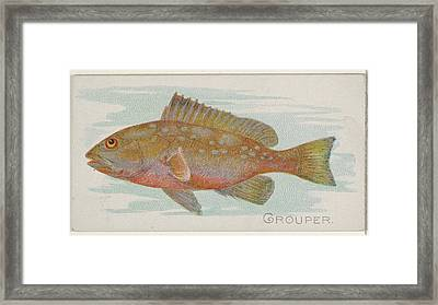 Grouper, From The Fish From American Framed Print by Issued by Allen & Ginter