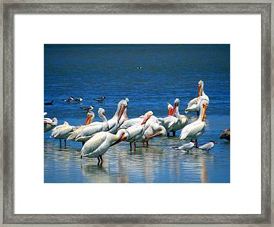 Grouping Framed Print