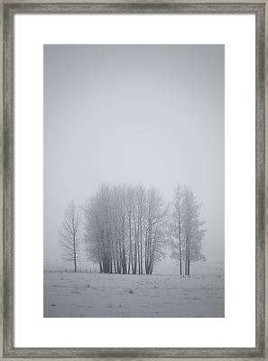 Grove Of Trees Covered In Hoar Frost On Framed Print by Roberta Murray