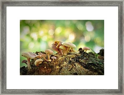 Grow Framed Print by Achmad Bachtiar