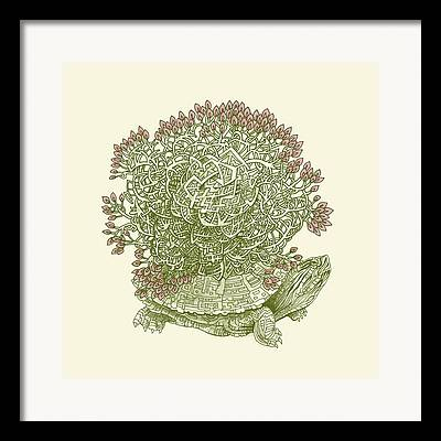 Reptiles Drawings Framed Prints