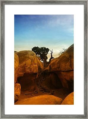 Growing Between The Rocks Framed Print by Jeff Swan