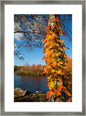 Growing Colors Framed Print by Karol Livote