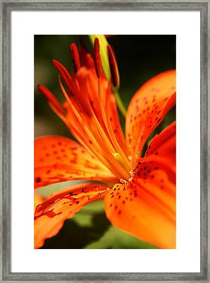 Growing Flame Framed Print by Kim Lagerhem