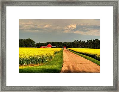Growing For Gold Framed Print