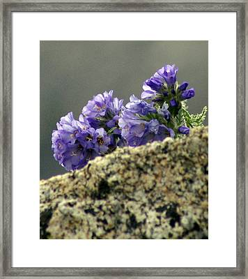 Framed Print featuring the photograph Growing In Granite by Jeremy Rhoades