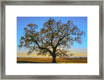Growing In Life Framed Print