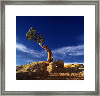 Growing In Rock 2 Framed Print