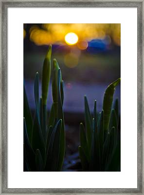 Growing In The Late Evening Sun Framed Print