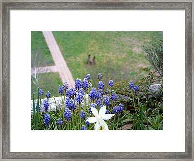 Growing Framed Print by Marc Philippe Joly