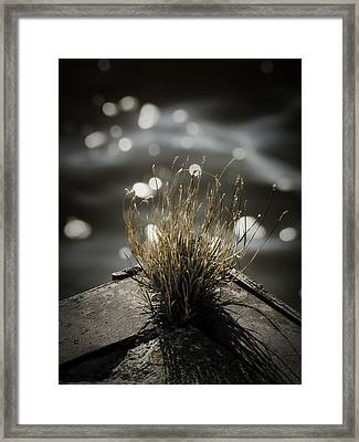 Growing Out Of Nothing Framed Print by Thomas Young